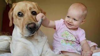 Забавные дети громко смеются над собаками. Сборник [NEW HD]
