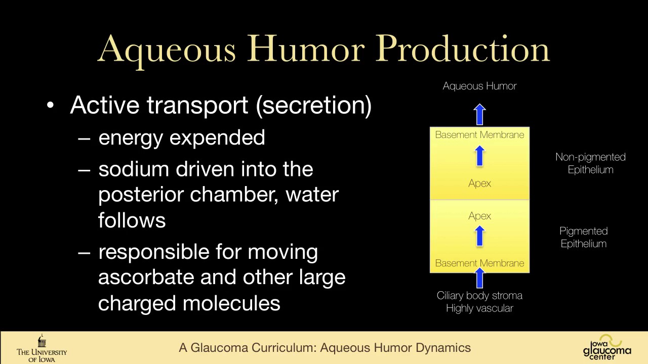 1 Basic Sciences Aqueous Humor Dynamics Anterior Chamber Anatomy