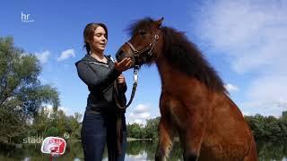 Tobi trifft Muffin, das klügste Pony Hessens
