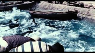 Contadini Del Mare (di Vittorio De Seta, 1955)