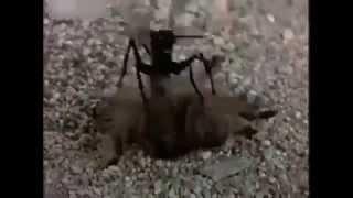 поединок двух насекомых!Паука и таракана!