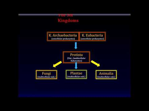 Biology. The Six Kingdoms Overview.