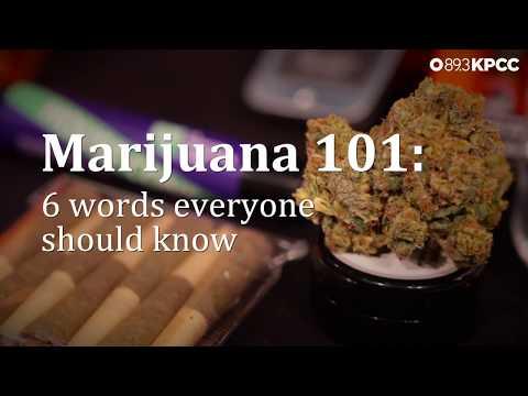 Marijuana 101: 6 words you need to know