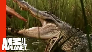 A Gator Bite to the Head is No Joke | Gator Boys