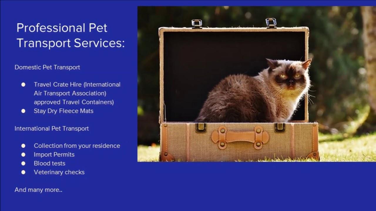 Professional Pet Transport Australia 1800 237 673 Youtube