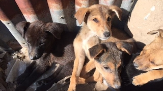 Animal welfare in action - Peepal Farm animal recovery center in India