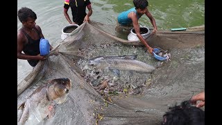 Fishing | Catching Stinging Catfish | Shing Fish From pond Using  Fishing Net  Catch 10000 Fishes