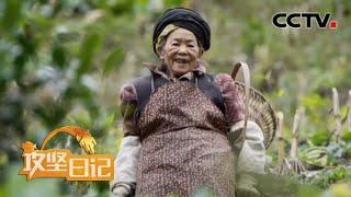 《攻坚日记》 20200609 走出中岗村(4) CCTV农业