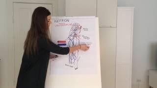 Nyrer og urinveje - Anatomi og fysiologi