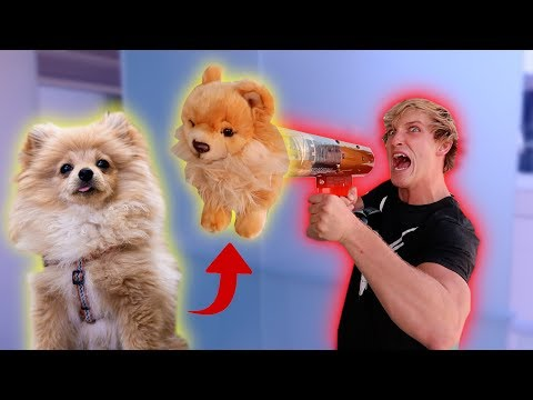 SHOOTING MY DOG OUT OF THE MERCH CANNON! **PRANK**