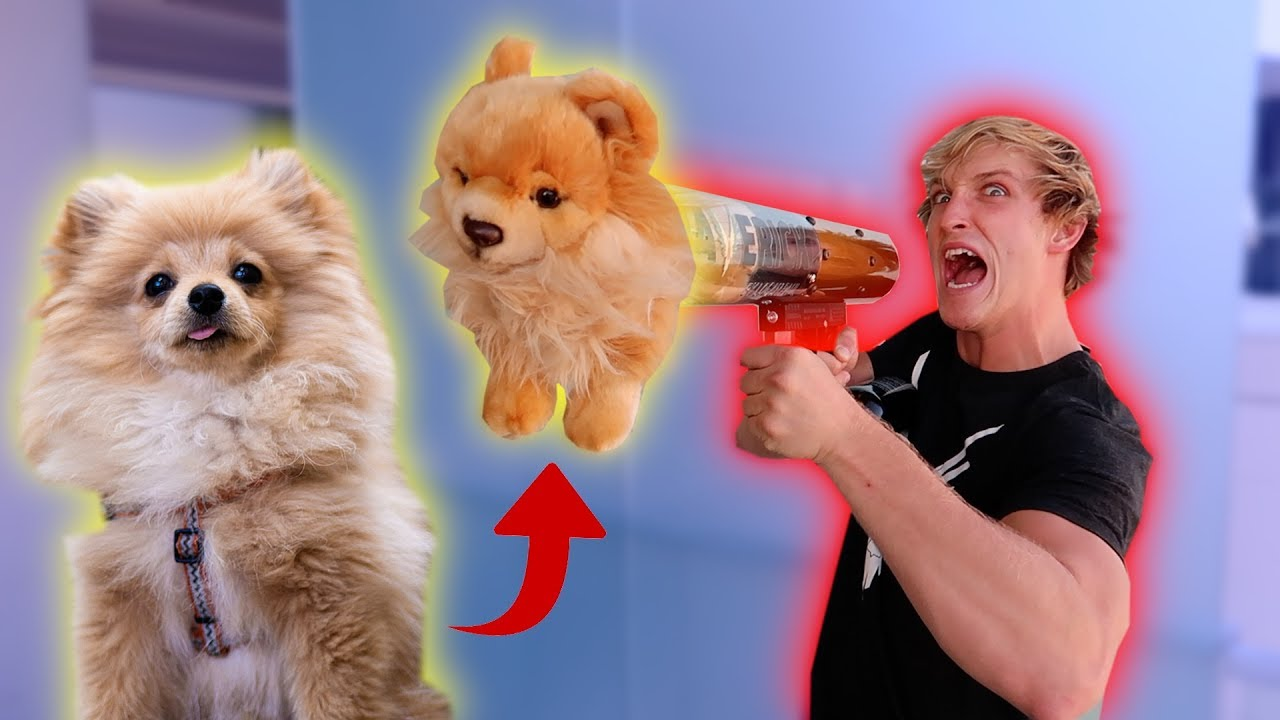 shooting-my-dog-out-of-the-merch-cannon-prank