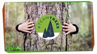 Terrific Trees: A SciShow #TeamTrees Compilation