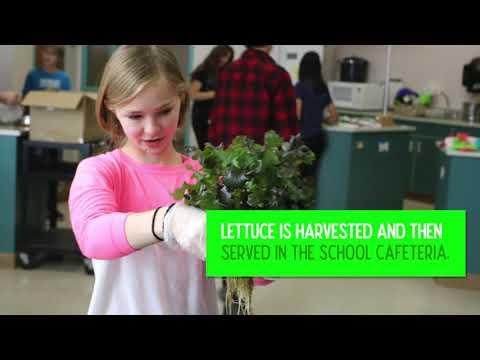 Escalante Lettuce