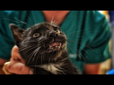 Thumbnail: What Happened To this Kitten's Mouth?!?!