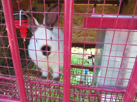 Клетка для кроликов с металла своими руками.
