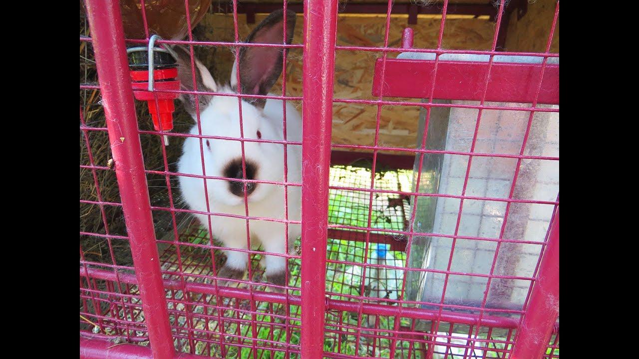 Клетки для кроликов металлические видео 45