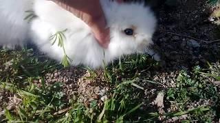 Tavşan 'ları dışarı çıkardım 😄☺