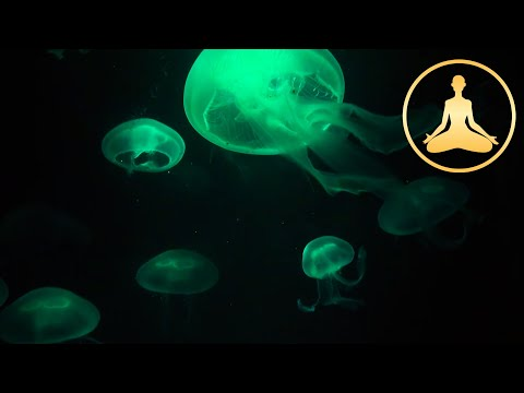 Jellyfish (deeply relaxing)