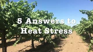 5 Answers to Heat Stress