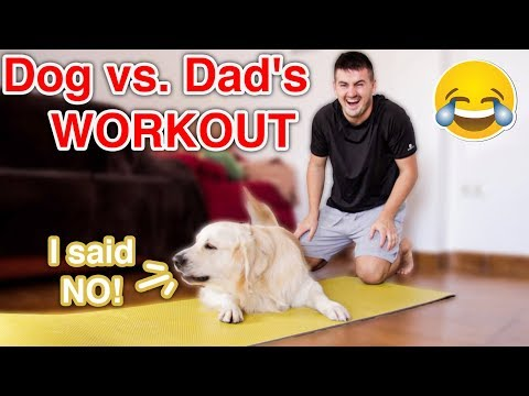 Dog vs. Dad's Workout | Funny Dog Bailey