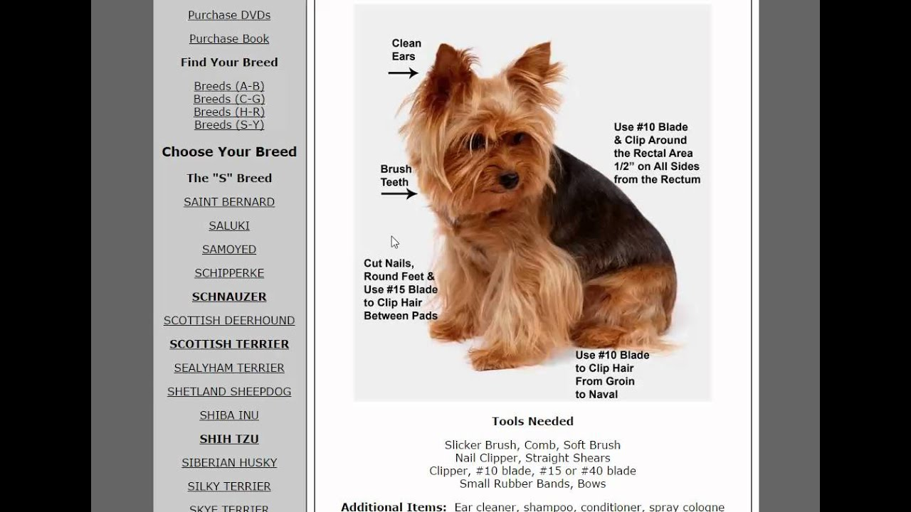 Free Dog Grooming School Certificate Onlinegroomingschool Com Youtube