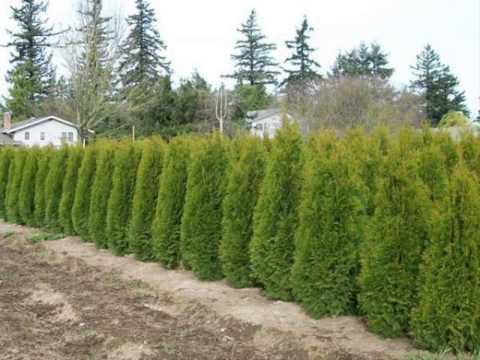 ขายต้นไม้ ขายต้นไม้ ปากช่อง