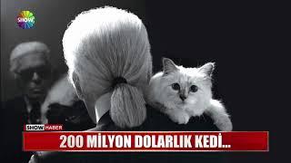 200 milyon dolarlık kedi...