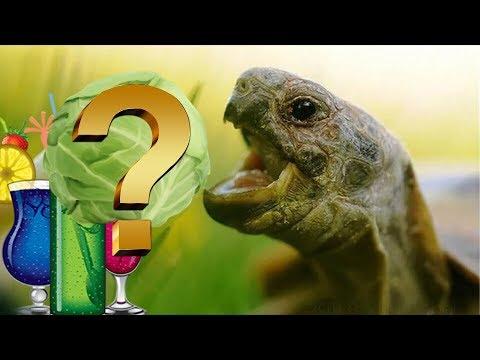 Чем кормить сухопутных черепах? Правильный рацион