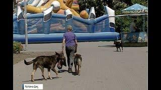 Запрет на свободный выгул: о новых поправках в «Правила содержания собак и кошек»