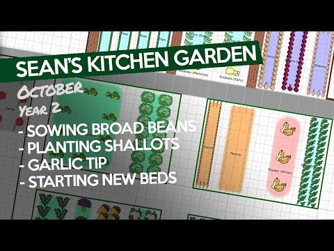 sean's-kitchen-garden-72---oct-y2:-broad-beans,-shallots-&-rain-digging