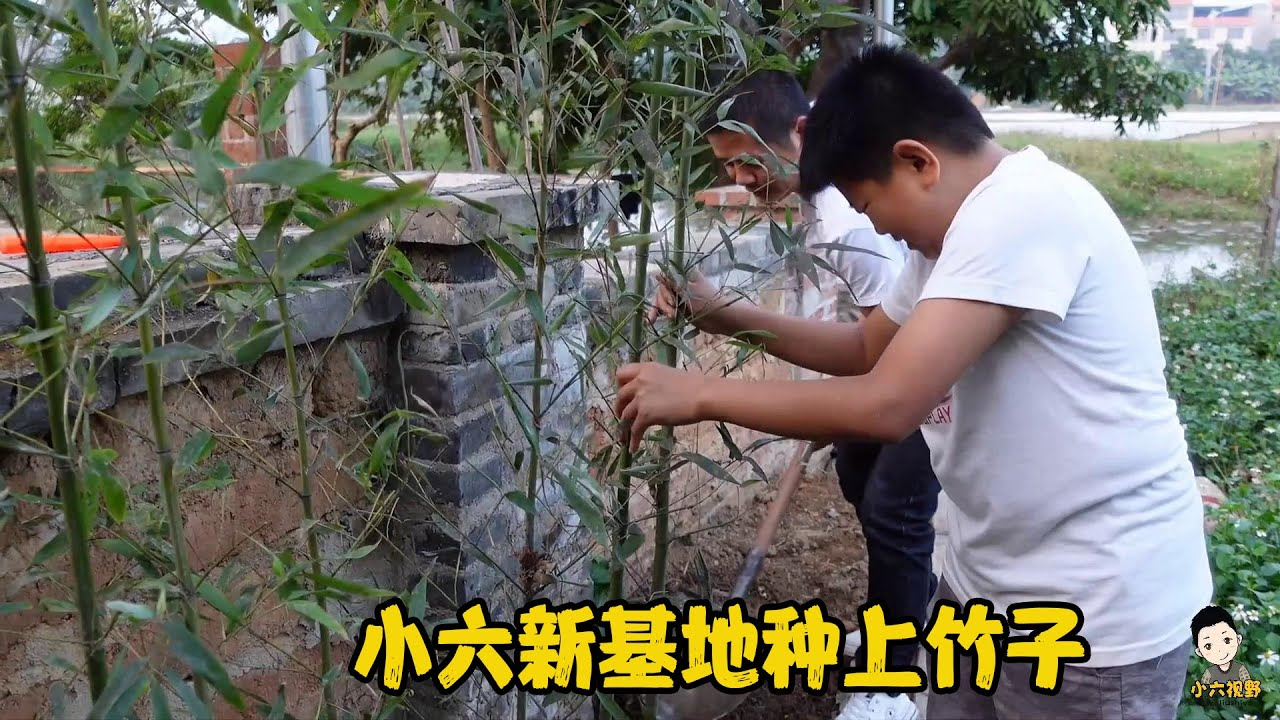 小六給基地種上竹子,4米長的外牆種了30棵,又乾成一單園林工程