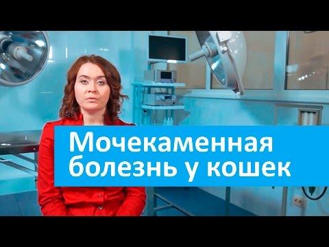 Консультация нефролога в Москве, запись на прием к врачу