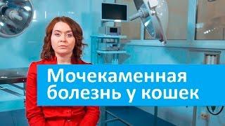 Мочекаменная болезнь у кошек. Ветеринарная клиника Свой Доктор о мочекаменной болезни у кошек