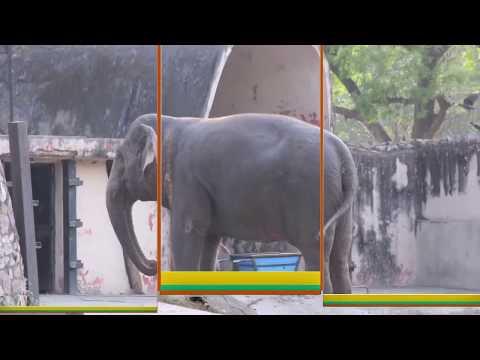 National Zoological Park Delhi-Sneak Peek.