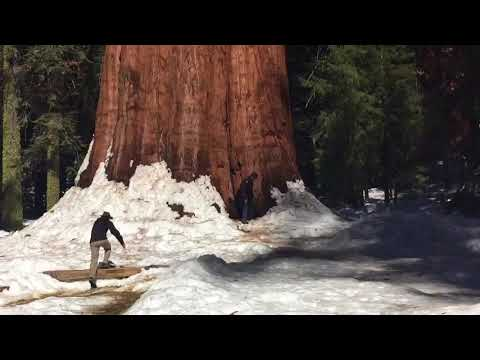 Giant Sequoia General Sherman tree next to tiny man and 10 feet of snow