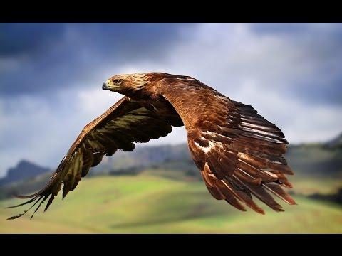 Эволюция или сотворение? Уникальное строение пера птицы