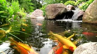 Welcome To Splash Supply Co Ecosystem Koi Pond Filtration, Waterfalls, And Fountains