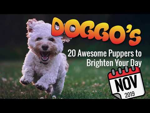 ♥ Heartwarming Doggos and Puppers | Nov 2019 | Many Doggo Breeds