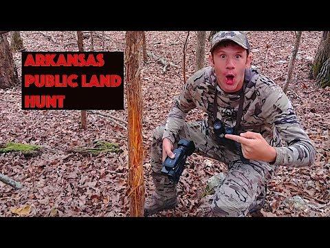 Arkansas Public Land, Lots Of Deer
