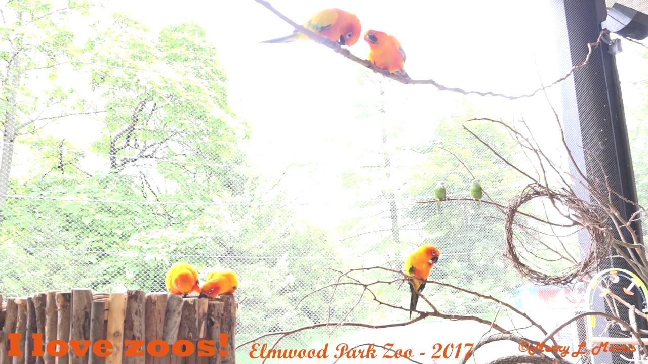 Elmwood Park Zoo Birds of Paradise Exhibit - YouTube