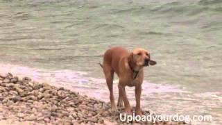 Upset Lost Dog Confused Master Nowhere In Sight Rock Hot Beach Wave Ocean