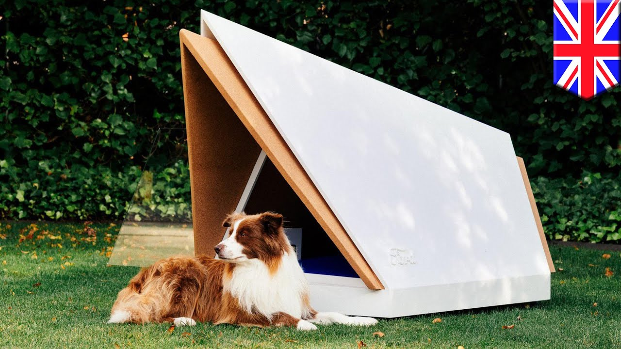 Sound Proof Kennel Would Calm Dogs During Fireworks Tomonews