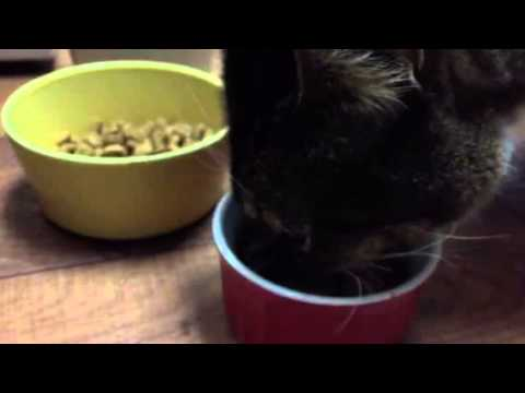 Cats Stop Eating Wet Food