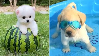 Baby Dogs 🔴 Cute and Funny Dog Videos Compilation #8 | Funny Puppy Videos 2021