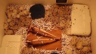 Dermestid Beetle Housing Setup/Tips | Taxidermy | Skull Cleaning