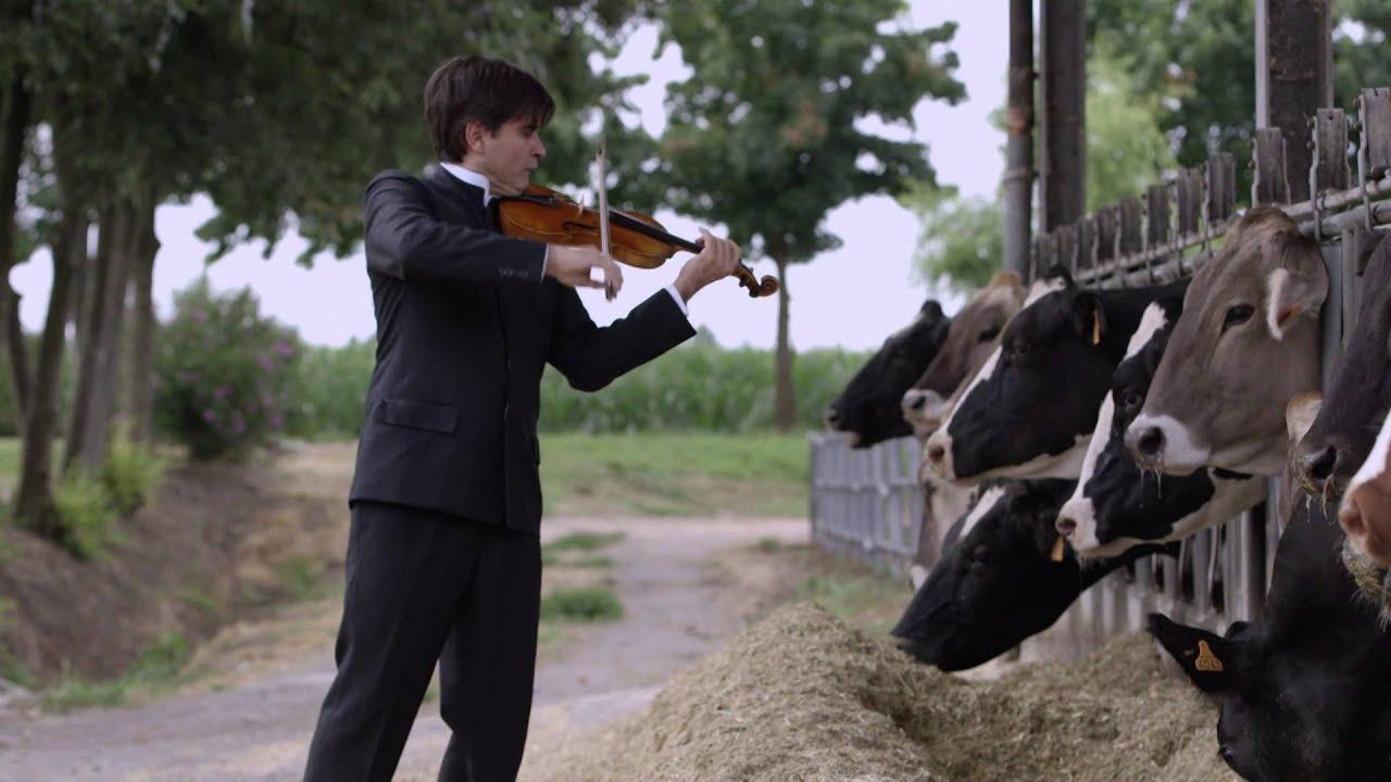 Happy Cow Concert - Vi...V Is For Violin