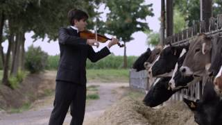 Happy Cow Concert - Violin and Piano. Cremona, Italy