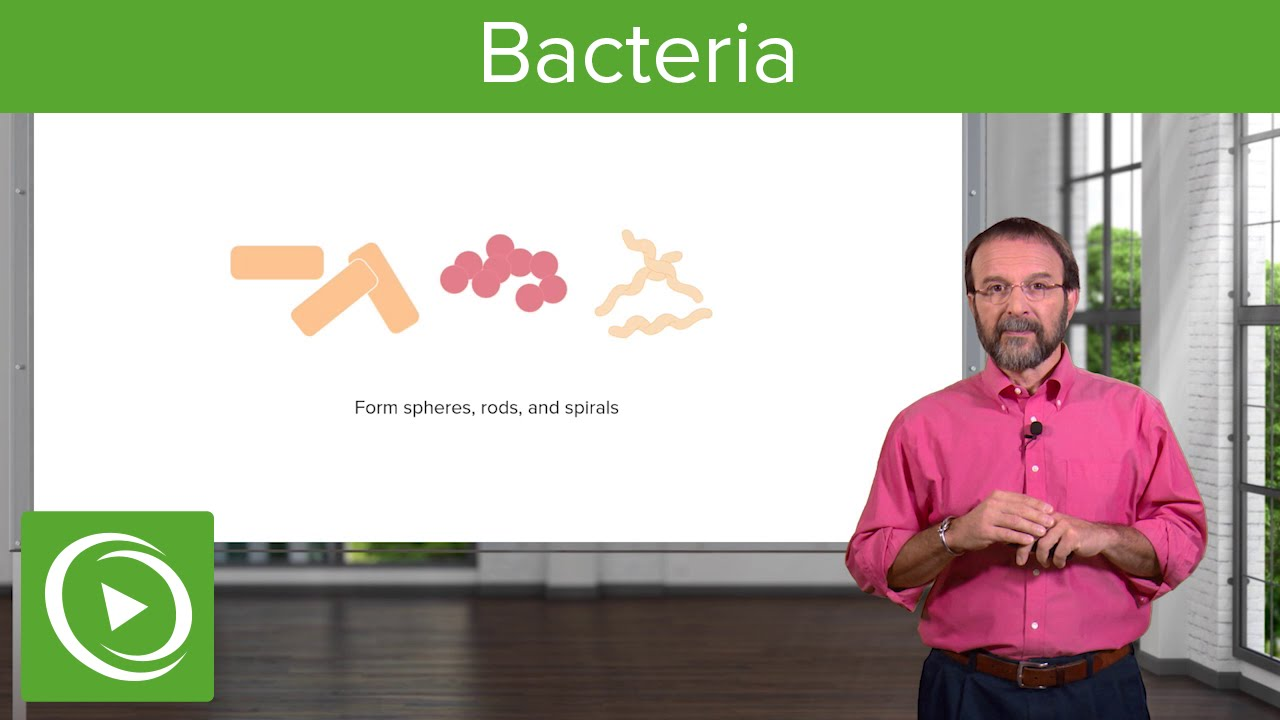 Bacteria: Structure & Types – Microbiology | Lecturio