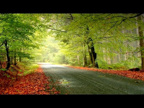 1 HOUR Morning Walk Music | Calming Music | Peaceful Music | Latest Mind Relaxation Music 2016