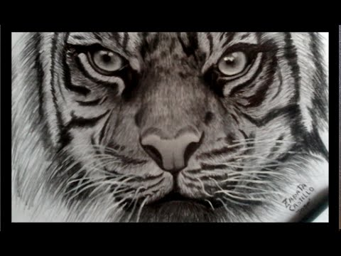 Dibujando tigre realista con lapicero y lapiz   drawing Tiger with pen and pencil   HD 60p